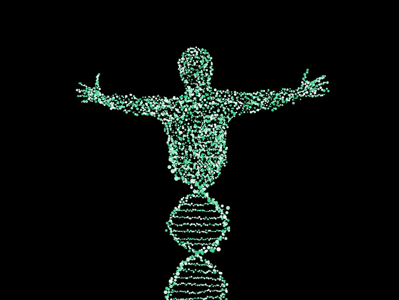 Glutamin DNA